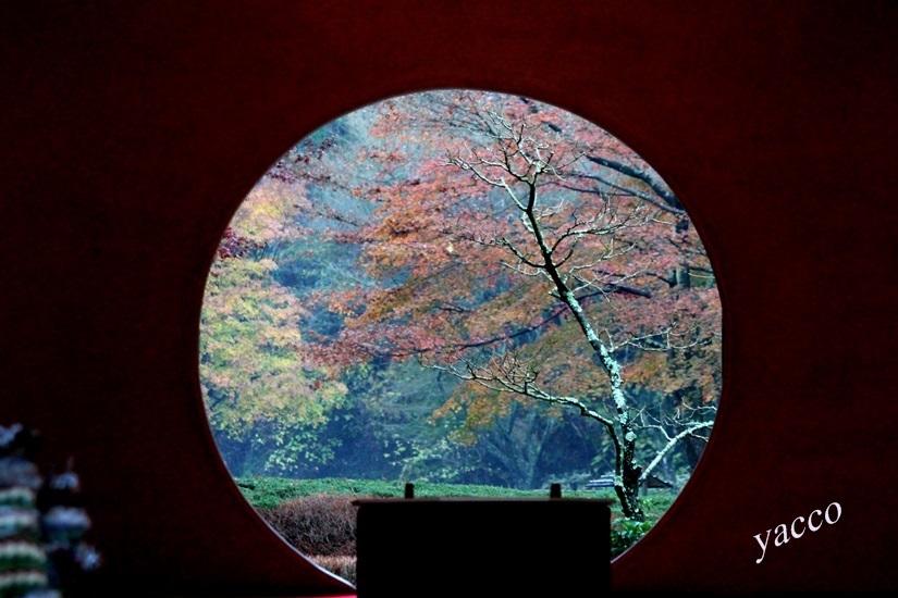 晩秋の明月院