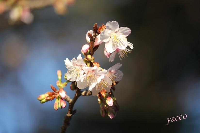 大巧寺の花と・・・