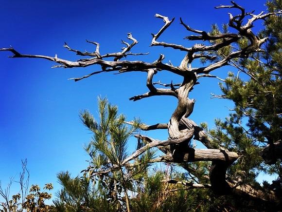 雲霞山の枯れ木