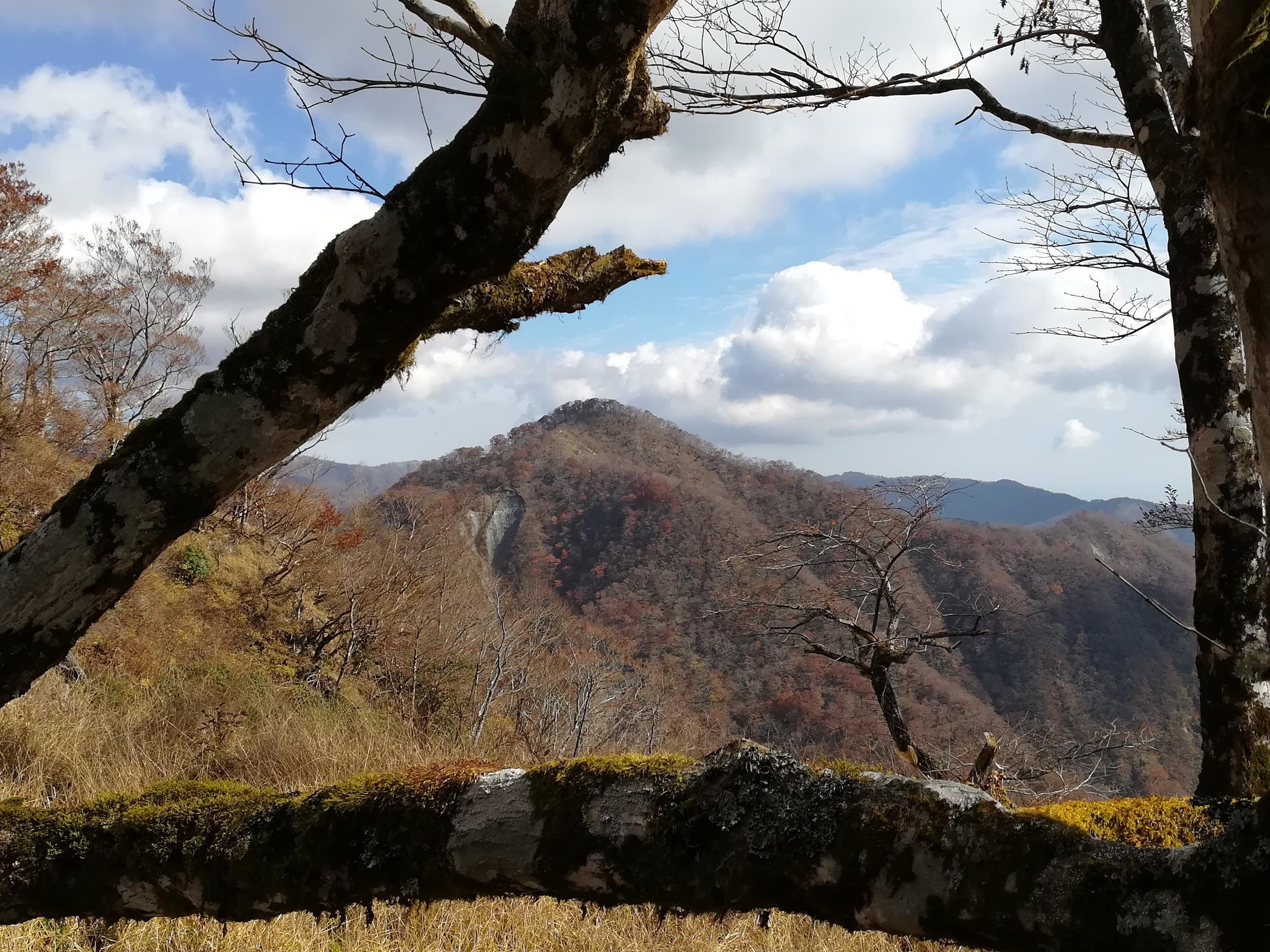 ブナの巨木手前 無名山
