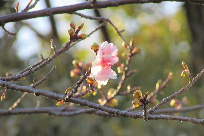 mizumoto190217-134.jpg