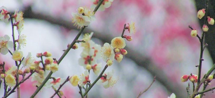 oomiyadaini190211-115.jpg