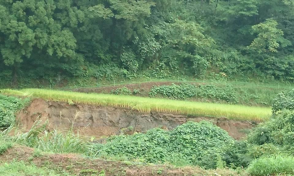 【無情な雨。被災した吉川区を視察】-1