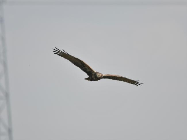 弥富野鳥園 (9)