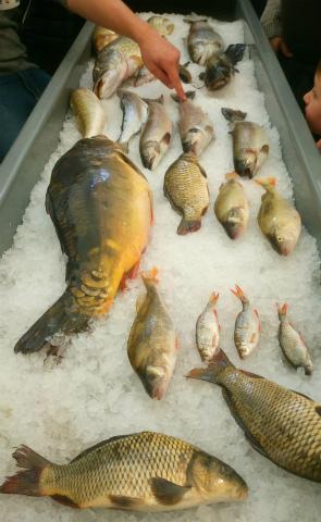 LWH魚2