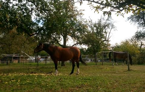 ご近所さん馬1