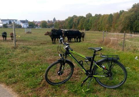 チャリと牛