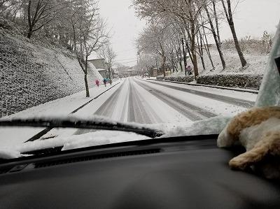 20181121_初雪 (3)