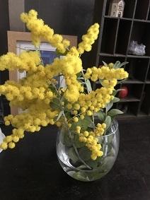 mimoza201933.jpg
