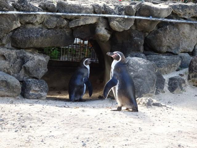 1月24日 ペンギン